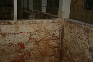 claw marks all around the filthy kennel walls